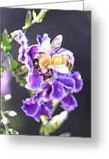 Sweet Bee Greeting Card
