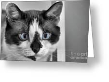 Sweet Blue Eyes Greeting Card