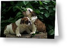 Sweet Couple Greeting Card