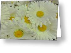Sweet Daisy Faces Greeting Card