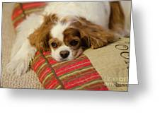 Sweet Dog Face Greeting Card