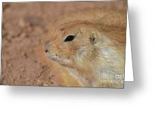Sweet Face Of A Prairie Dog Up Close And Personal Greeting Card