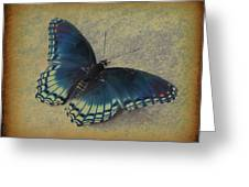 Sweet Flutterby Greeting Card