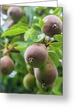 Sweet Fruit Greeting Card