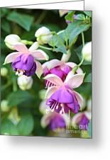 Sweet Fuchsia Flowers Greeting Card