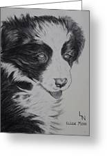 Sweet Girl Border Collie Puppy Greeting Card