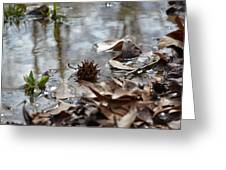 Sweet Gum Seed Pod In Mississippi Winter Greeting Card