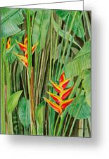 Sweet Heliconias Greeting Card