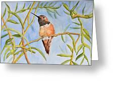 Sweet Hummingbird Greeting Card