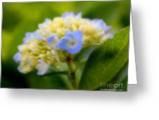 Sweet Hydrangea Greeting Card