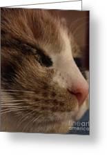 Sweet Kitten Greeting Card