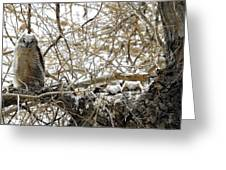 Sweet Owlets Greeting Card