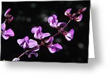 Sweet Pea Delight Greeting Card