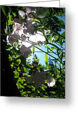 Sweet Peas 103 Greeting Card