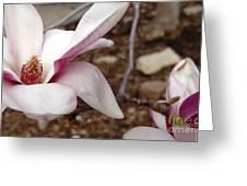 Sweet Pink Magnolia Greeting Card