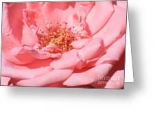 Sweet Pink Rose  Greeting Card