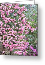 Sweet Pink Southern Azaleas Greeting Card