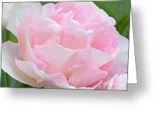 Sweet Pink Tulip Greeting Card