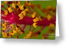 Sweet Pollen 2 Greeting Card