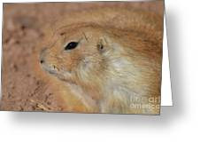 Sweet Profile Of A Prairie Dog Playing In Dirt Greeting Card