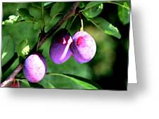 Sweet Ripe Blue Plum On A Branch Greeting Card