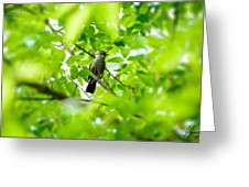 Sweet Song Mother Bird Greeting Card