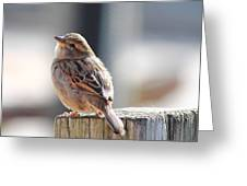 Sweet Sparrow Greeting Card