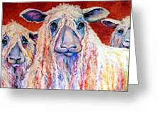Sweet Wensleydales Sheep By M Baldwin Greeting Card by Marcia Baldwin
