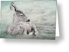 Sweet Young Deer Greeting Card