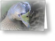 Sweetest Mallard Expression Greeting Card