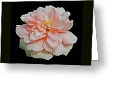 Sweetheart Rose Greeting Card