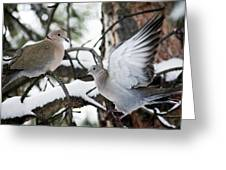 Sweetness In The Trees Greeting Card