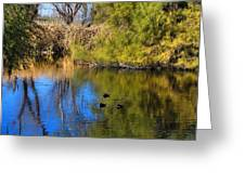 Sweetwater 8 Greeting Card