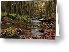 Swift Run Greeting Card