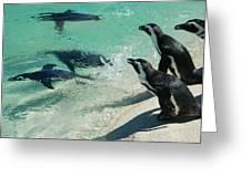 Swim Race - African Penquins Greeting Card