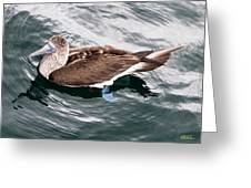 Swimming Booby Greeting Card