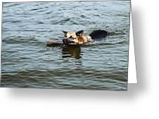 Swimming Dog Greeting Card