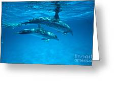 Swimming Dolphins Greeting Card