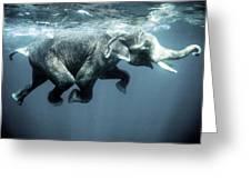 Swimming Elephant Greeting Card