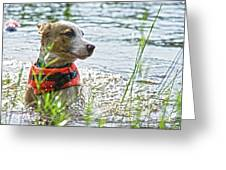 Swimming Family Dog Greeting Card