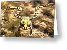 Swimming Frog Greeting Card