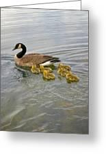 Swimming Geese Greeting Card
