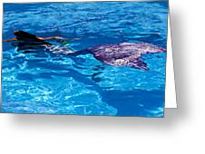 Swimming Mermaid Greeting Card