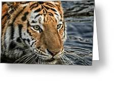 Swimming Tiger Greeting Card