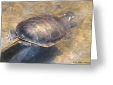 Swimming Turtle Greeting Card