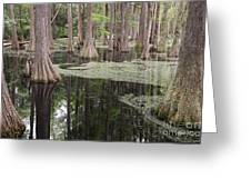 Swirls In The Swamp Greeting Card