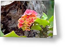 Swirls Of Pink Greeting Card
