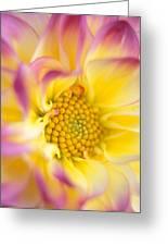 Swirly Dahlia Greeting Card