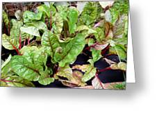 Swiss Chard In A Vegetable Garden 1 Greeting Card
