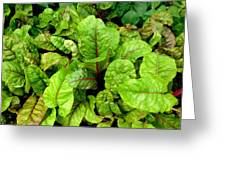 Swiss Chard In A Vegetable Garden 4 Greeting Card